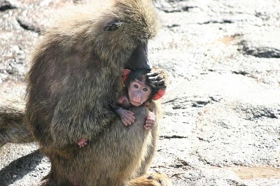 monkey-67029_960_720